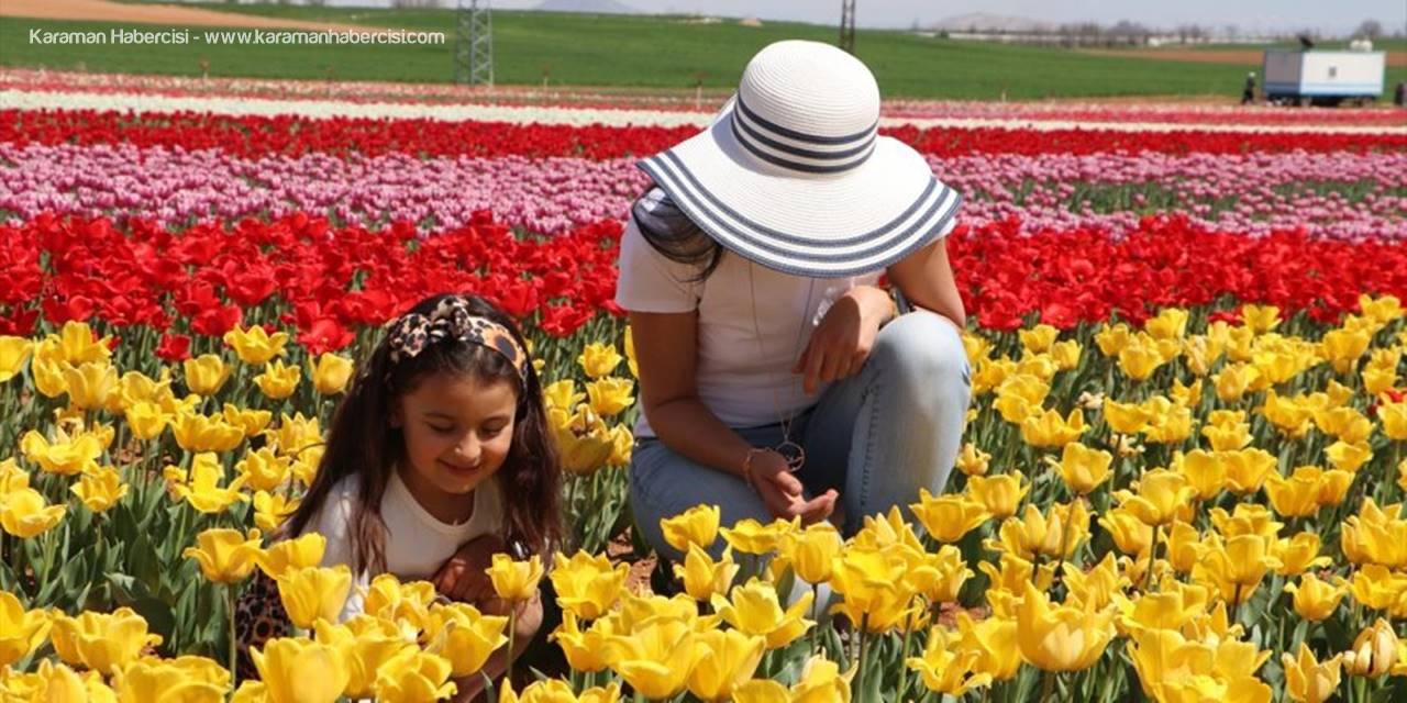 Karaman'da Bu Sene Lalelerde Korona Virüs Sessizliği