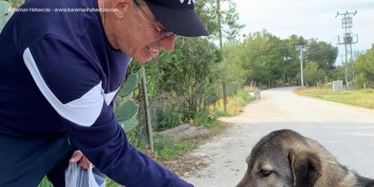 Antalyalı İş Adamı Sokak Hayvanları İçin Mama Dağıttı
