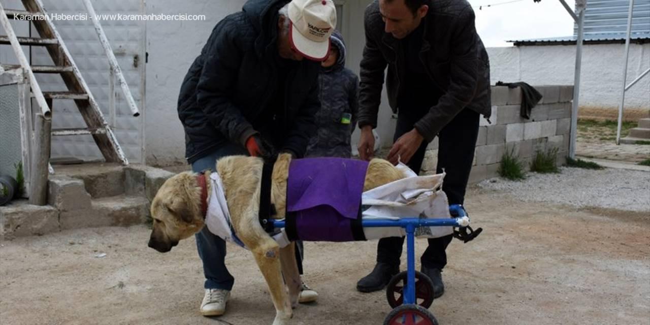 Aksaray'da Kazada Felç Kalan Köpeğe Yürüteç Desteği