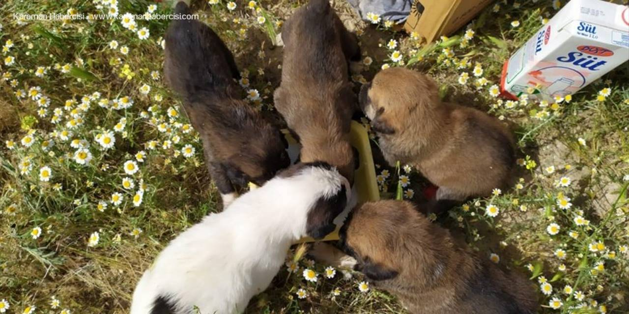 Yavru Köpekler Tilki Yuvasında Mahsur Kaldı