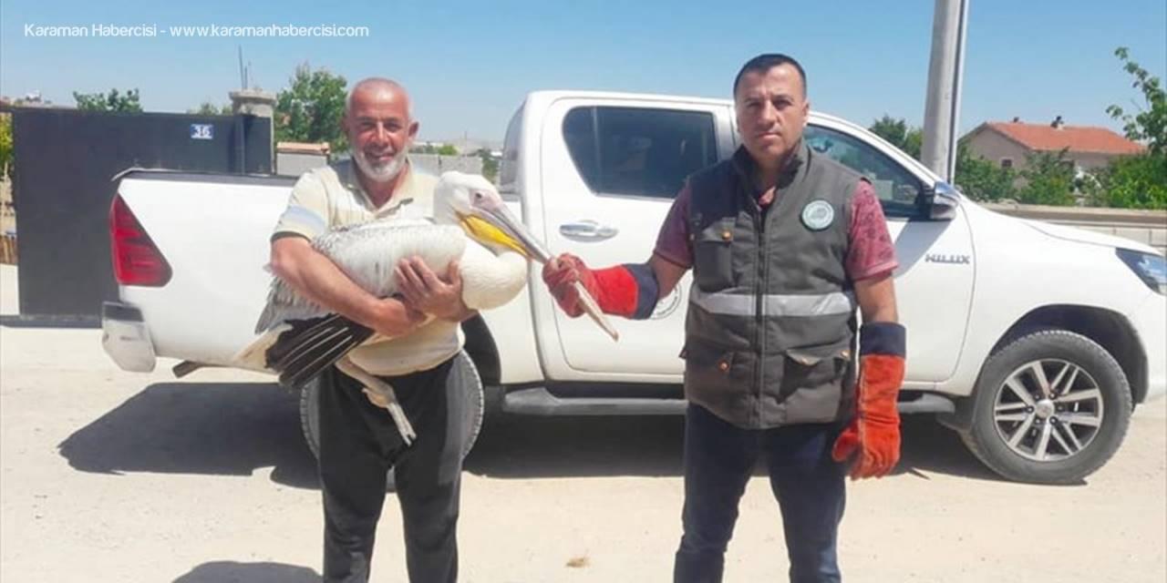 Konya'da Yaralı Halde Bulunan Pelikan Koruma Altına Alındı