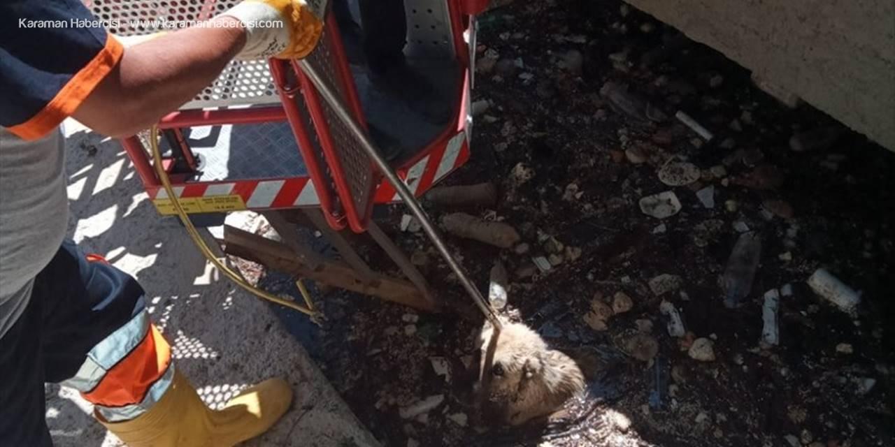 Karaman'da Kanala Düşen Köpek İtfaiye Ekiplerince Kurtarıldı