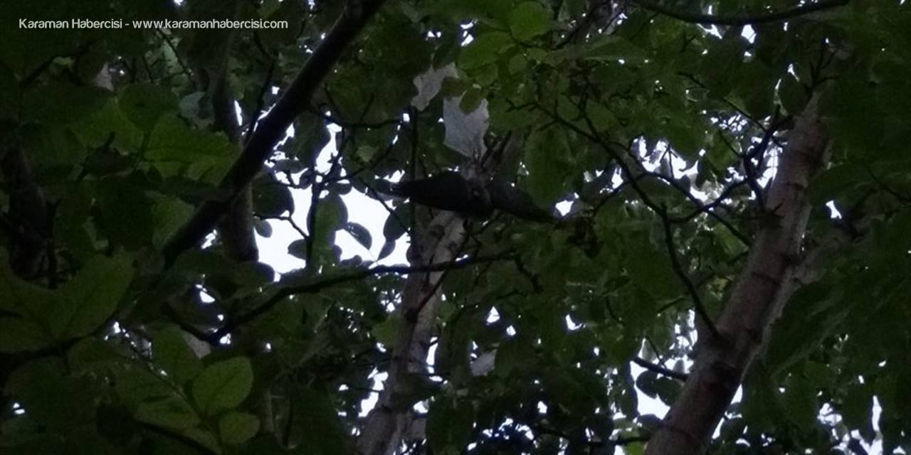 Ağaçta asılı kalan yavru kargayı itfaiye kurtardı