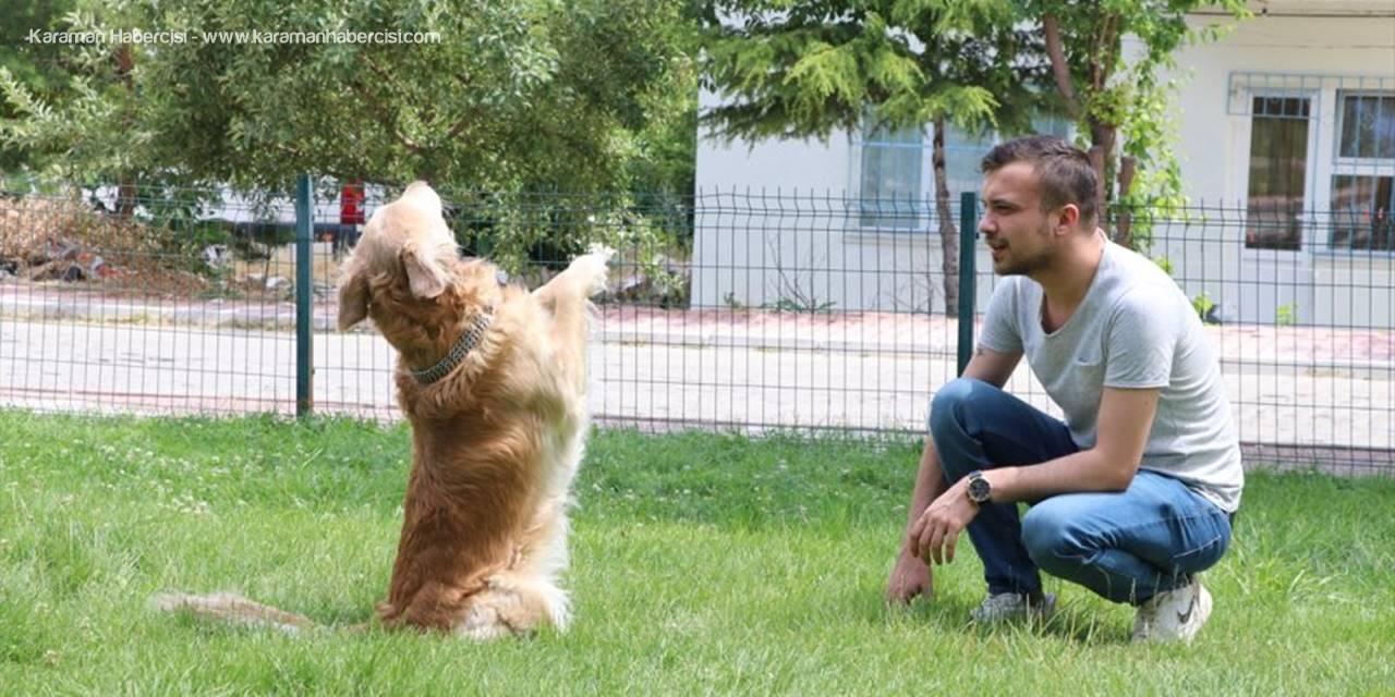 Hayvansever Gençten Sokak Hayvanlarına Mama Desteği