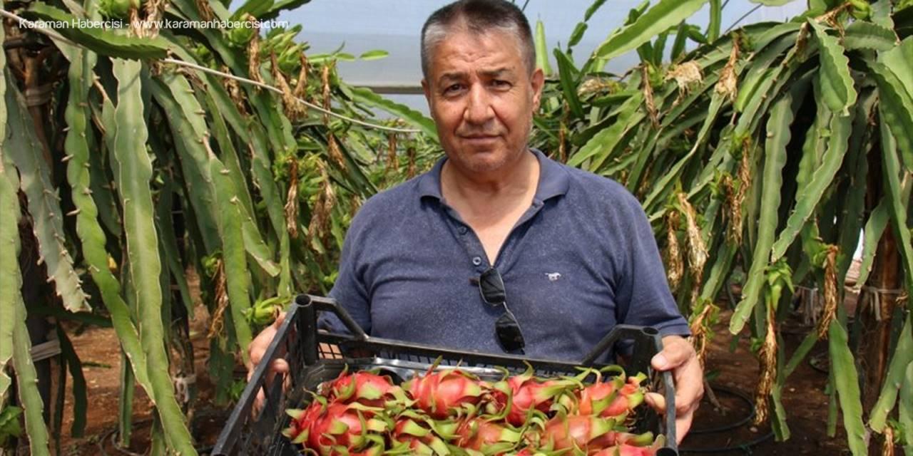 Mersin'de Emekli Öğretmenin Ejder Meyvesi Merakı Kazanca Dönüştü
