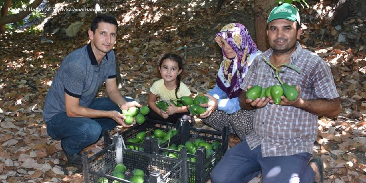 Avokadoda Hedef 70 Milyon Adet Üretim