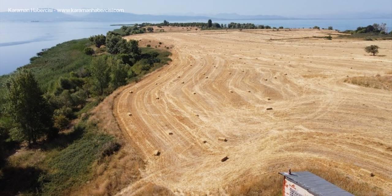 Beyşehir Gölünün Ortasında Hububat Hasadı