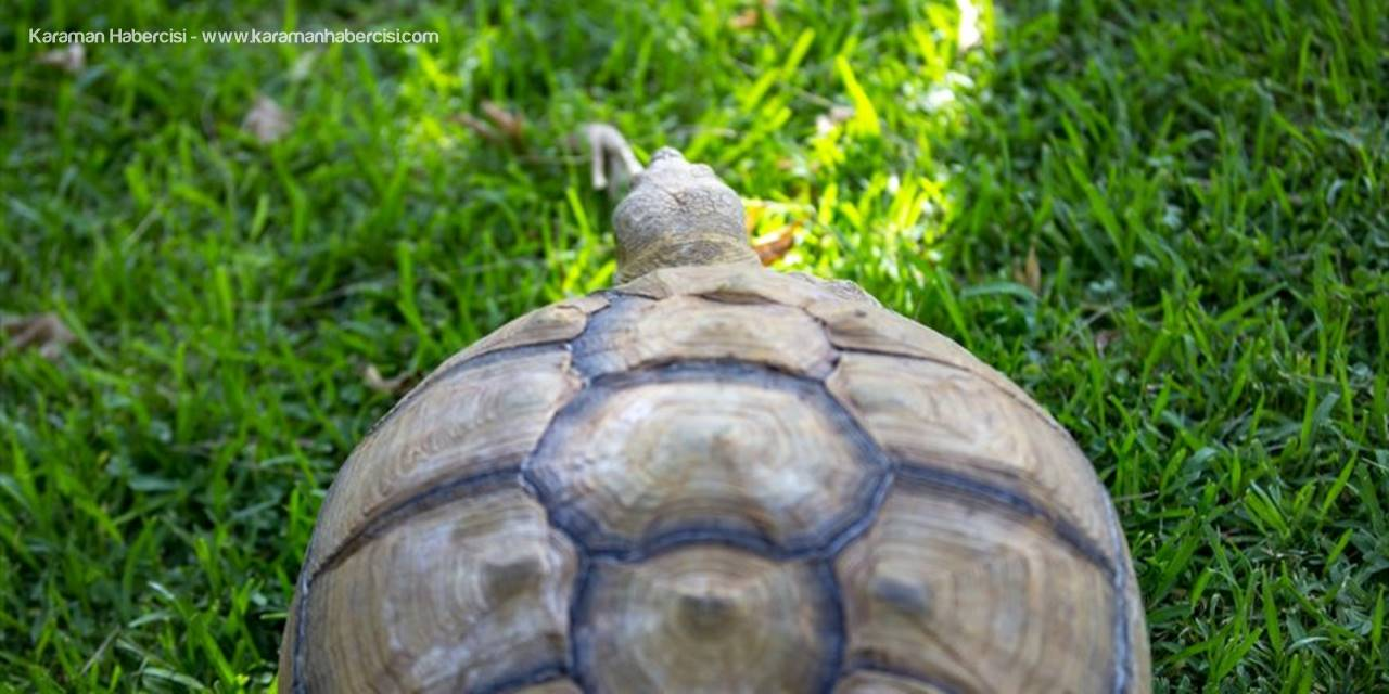 Antalya'da Hayvanat Bahçesini Tatlı Telaş Sardı
