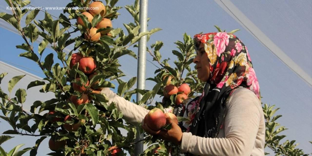 Mersin'de Erkenci Yaz Elması Kalitesi Ve Fiyatıyla Üreticisini Sevindiriyor
