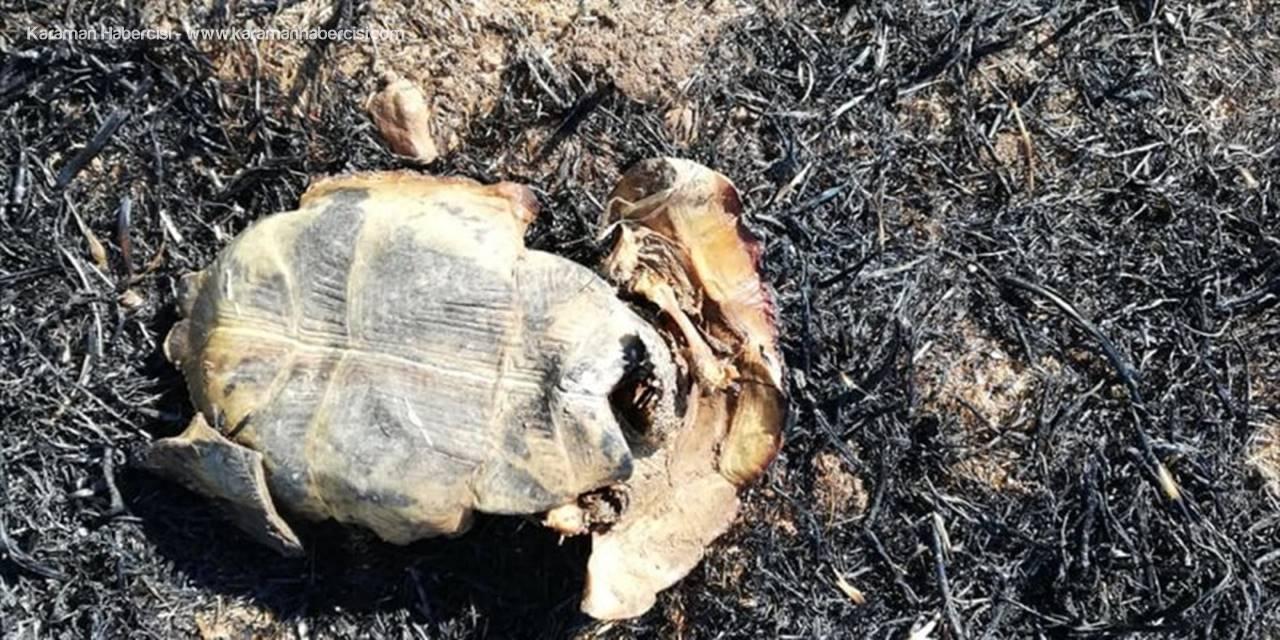 Bilinçsiz Anız Yangını Kaplumbağayı Telef Etti
