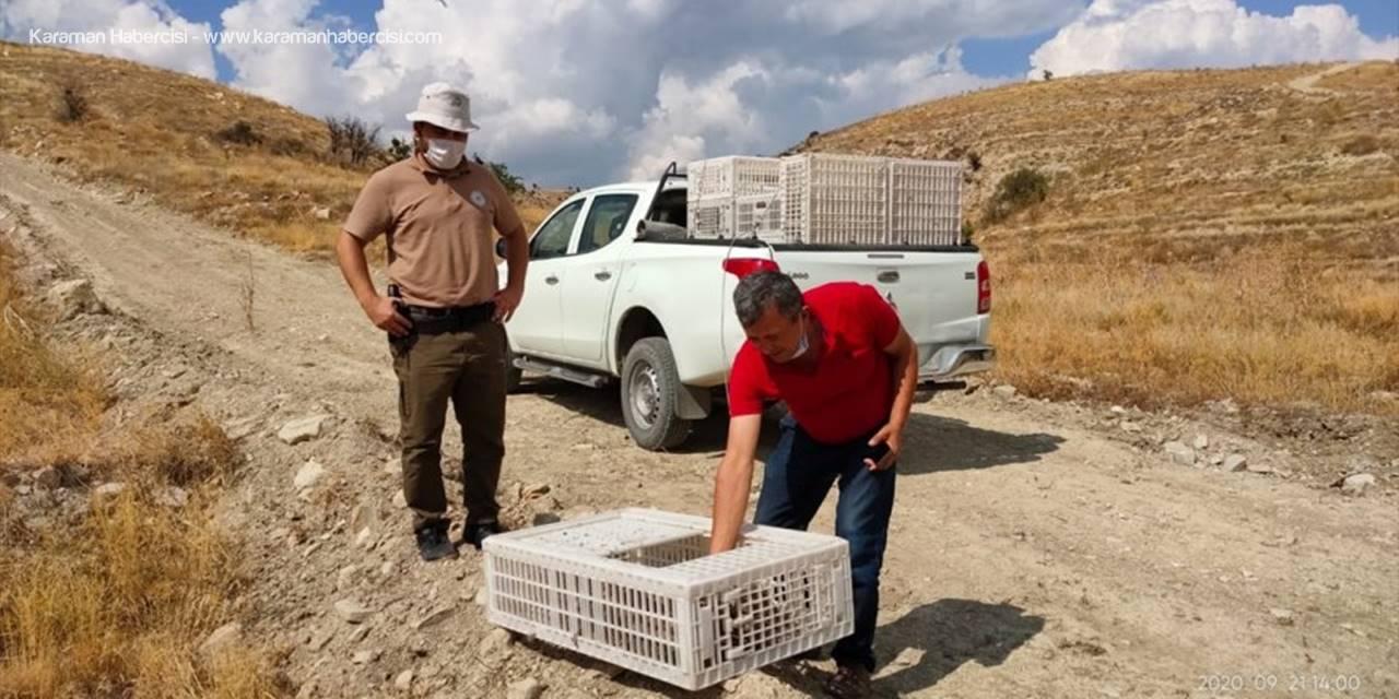 Antalya'da 1025 Kınalı Keklik Doğaya Bırakıldı