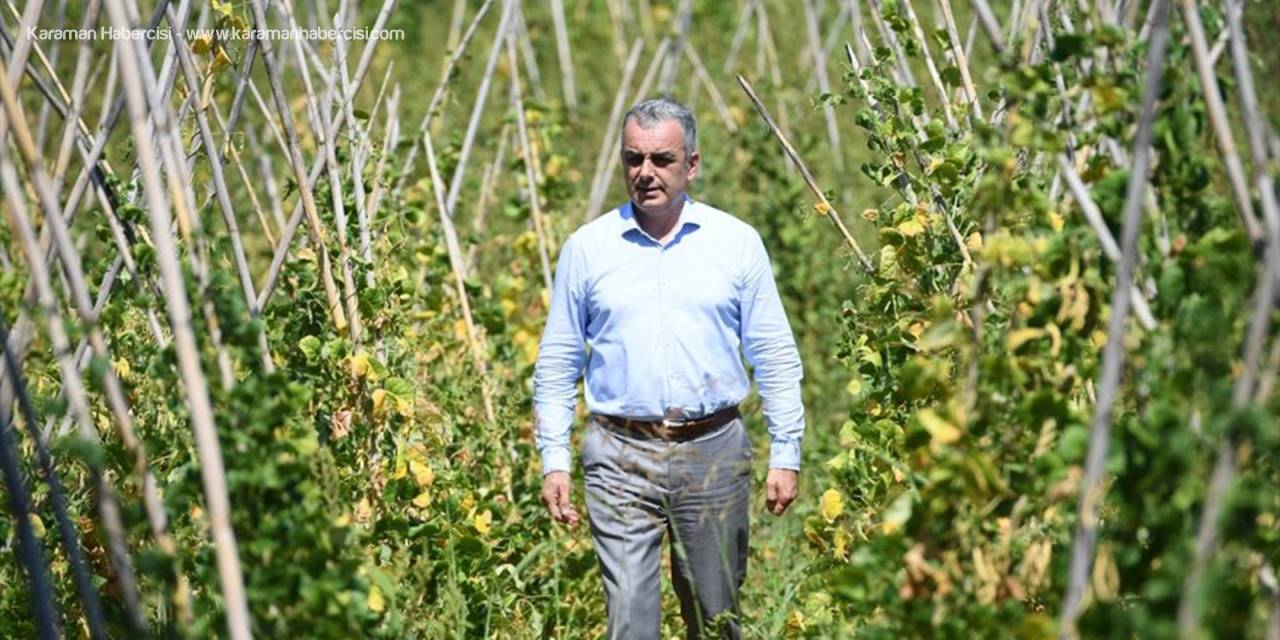 Antalya'nın Yöresel Çandır Fasulyesinin Üretimi 3 Yılda 15 Kat Arttı