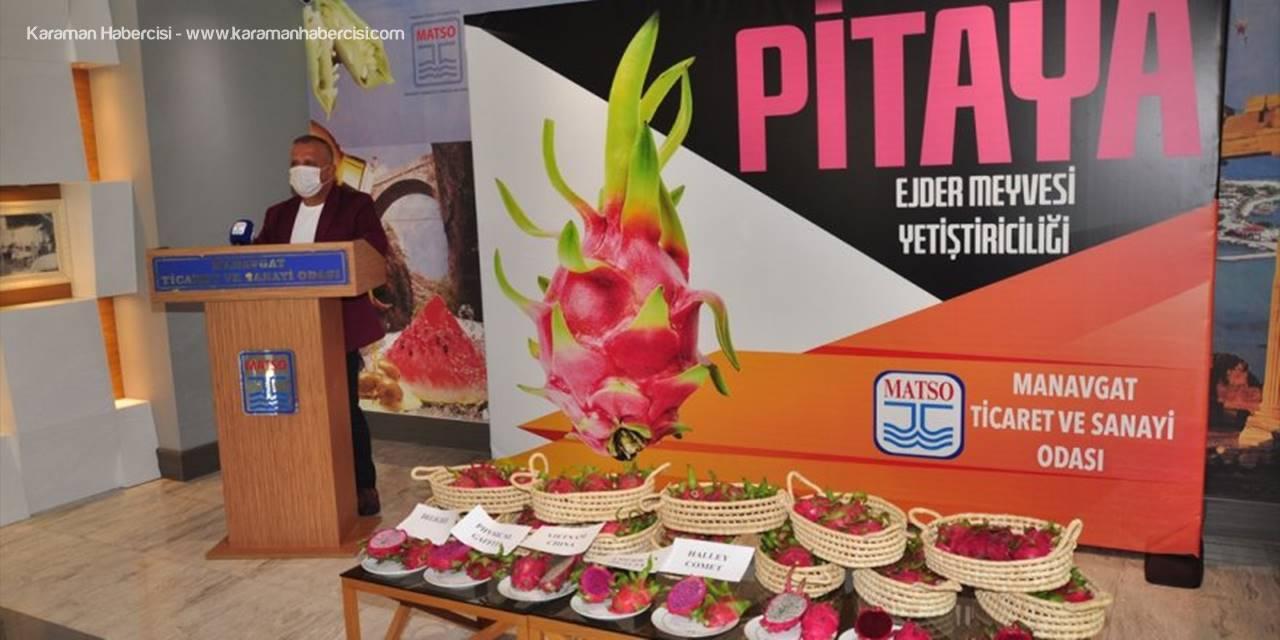 Matso, Üreticiler İçin Ejder Meyvesi Raporu Hazırladı
