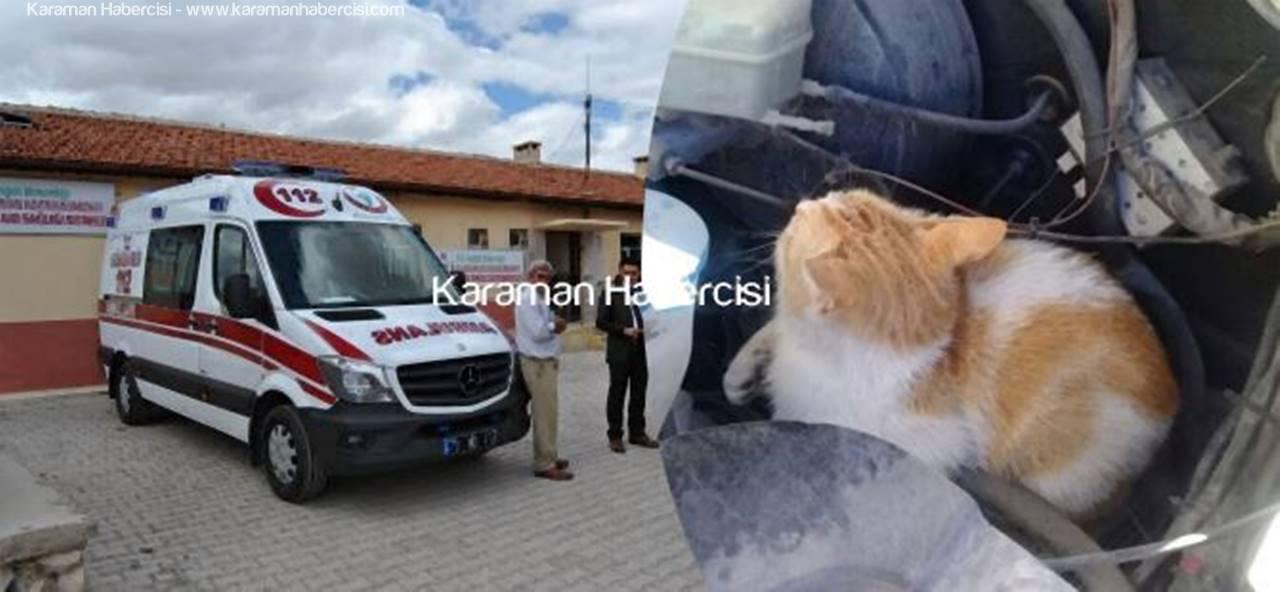 Ambulansın Davetsiz Misafiri