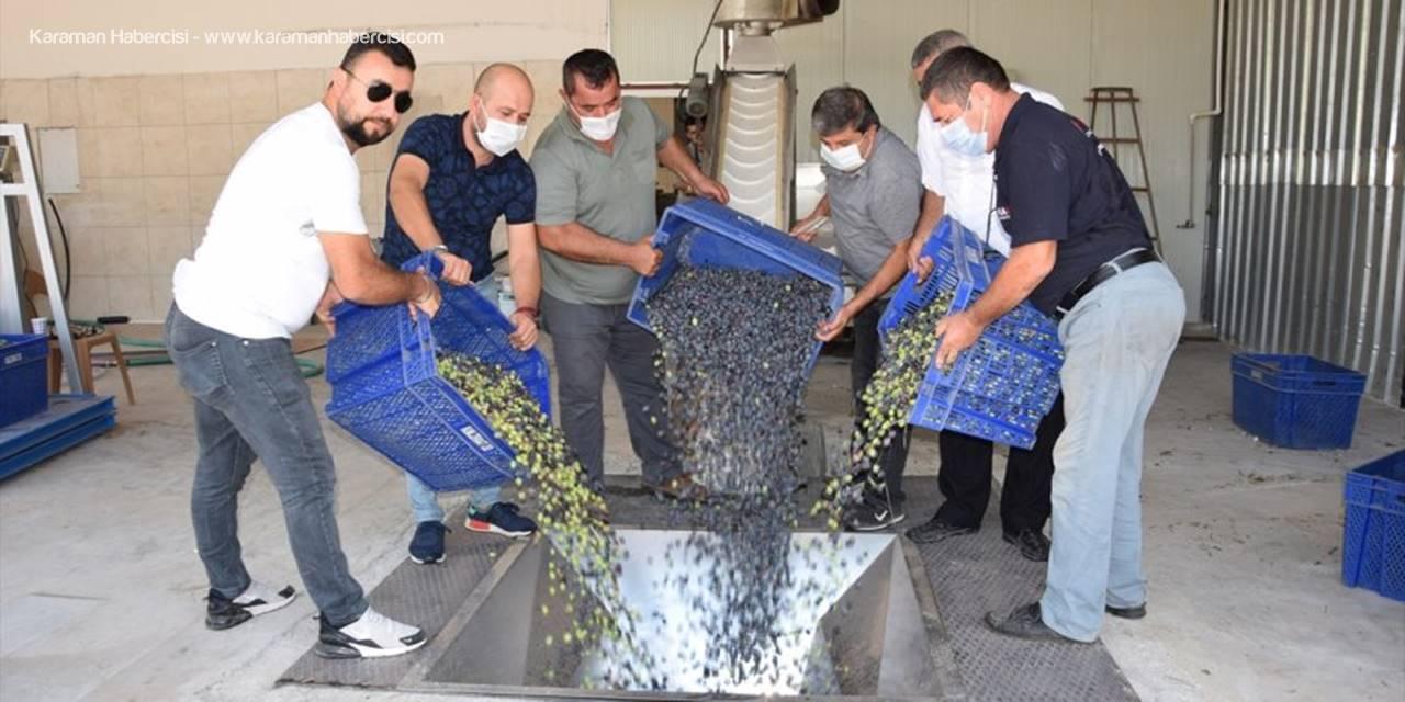 Kumluca Ziraat Odasının Zeytin Yağı Fabrikasında Deneme Üretimine Başlanıldı