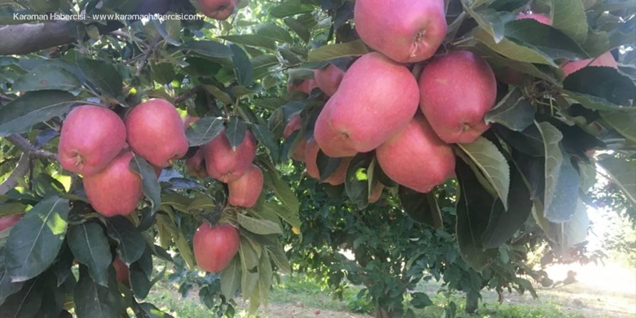 Beyşehir'de Elma Hasadı Başladı