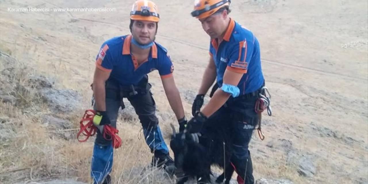 Niğde'de Kayalıklarda Mahsur Kalan Keçiler AFAD Ekiplerince Kurtarıldı