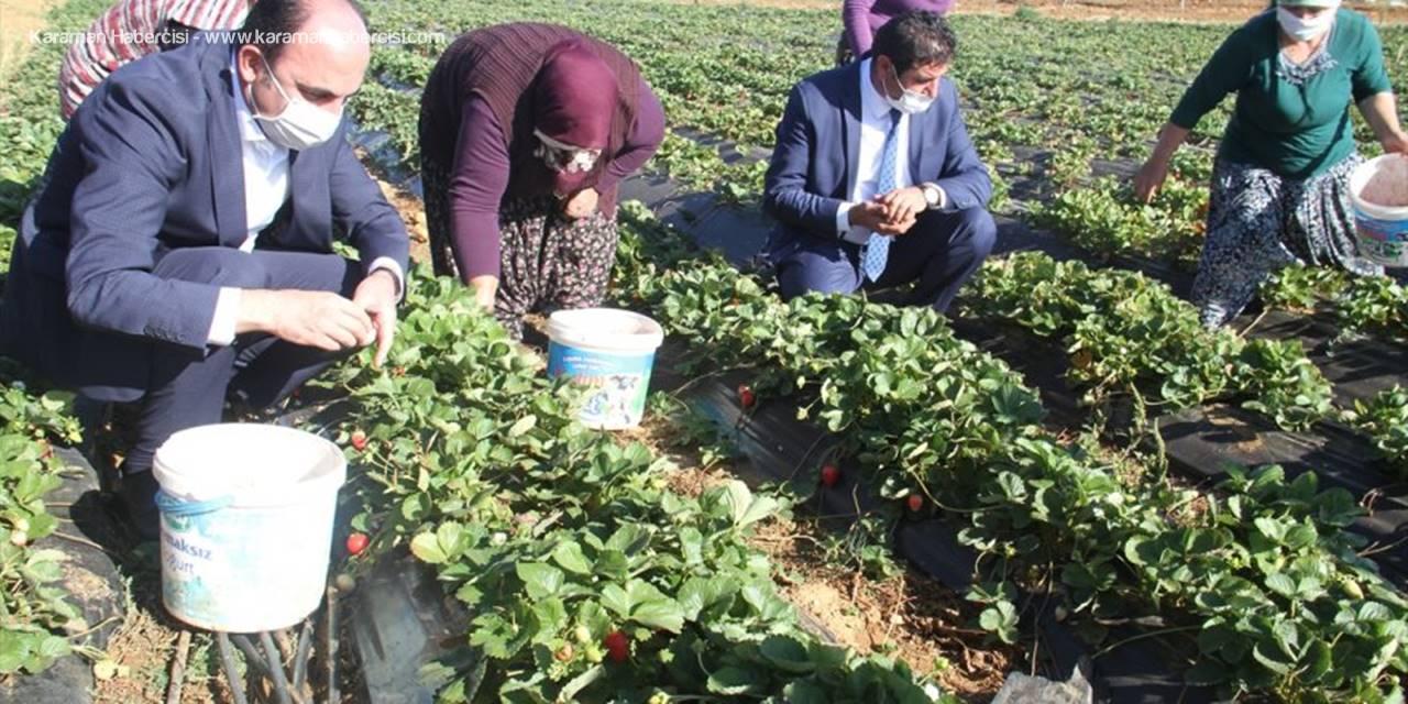 Büyükşehir Belediye Başkanı Altay, Çalışan Kadınlarla Birlikte Çilek Hasadı Yaptı