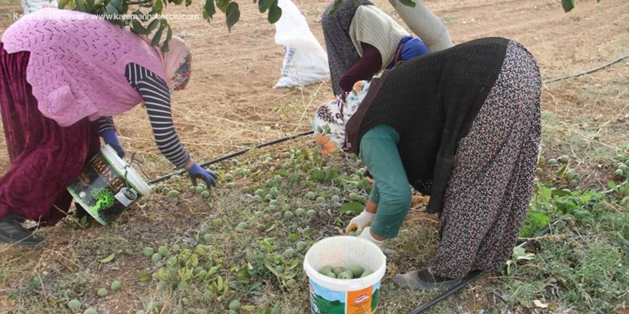 Annesinin Memleketine Kurduğu Ceviz Bahçeleriyle Tarımsal Üretime Katkı Sağlıyor