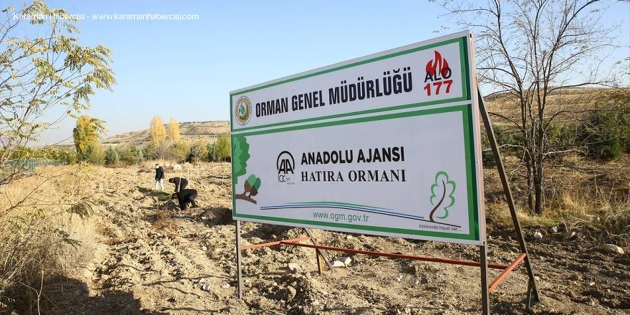 Anadolu Ajansı Çalışanları 2 Bin Fidanı Toprakla Buluşturdu