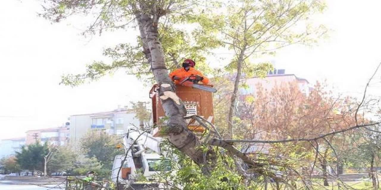 Aksaray'da Yeşil Alanlar Kışa Hazırlanıyor