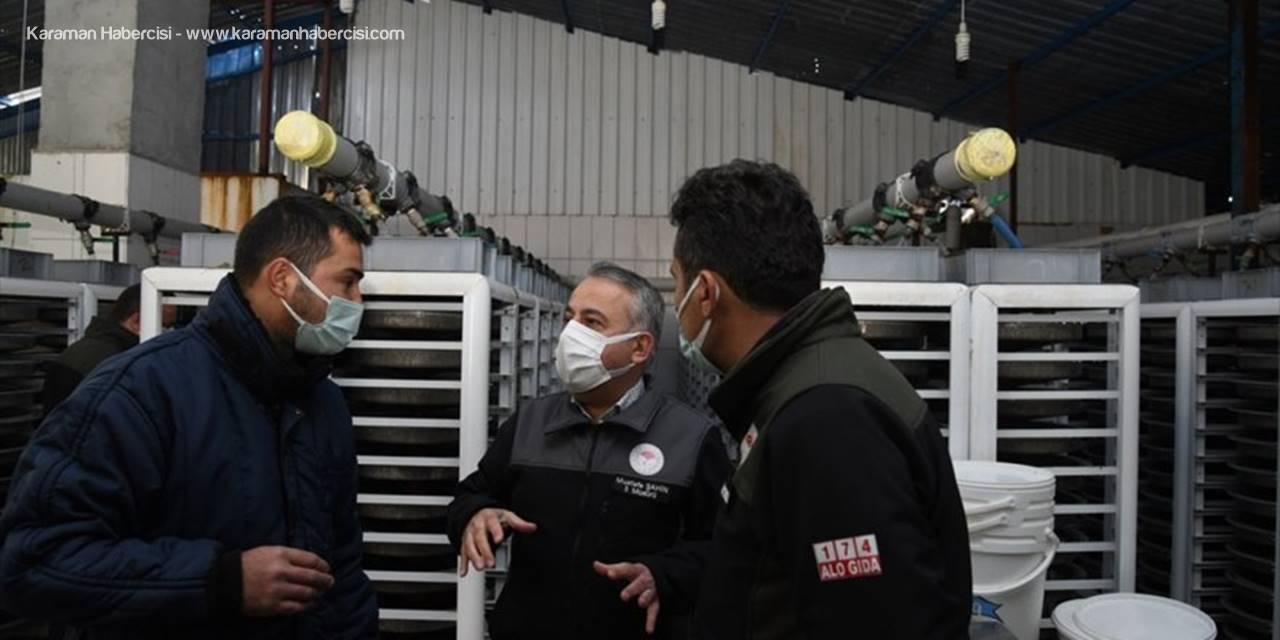 Kayseri Tarım Ve Orman Müdürü Mustafa Şahin Alabalık Kuluçkahanelerini İnceledi
