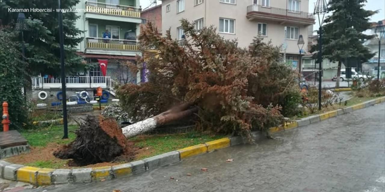 Derebucak'ta Şiddetli Rüzgar Ağaçları Devirdi
