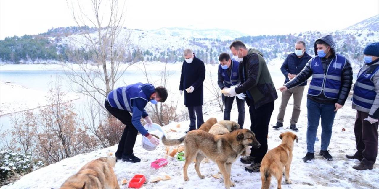 Ankara'da Sokak Ve Yaban Hayvanları İçin Yem Bırakıldı