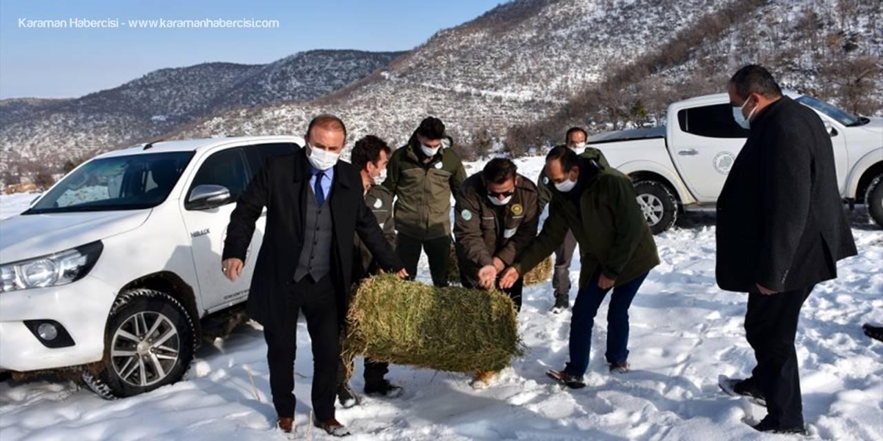 Aksaray'da Yaban Hayvanları İçin Doğaya 10 Ton Yem Bırakıldı