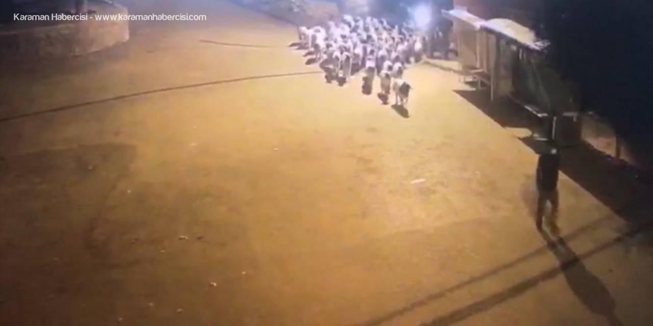 Mersin'de 100 Koyun Çaldıkları İddia Edilen 2 Kişi Tutuklandı
