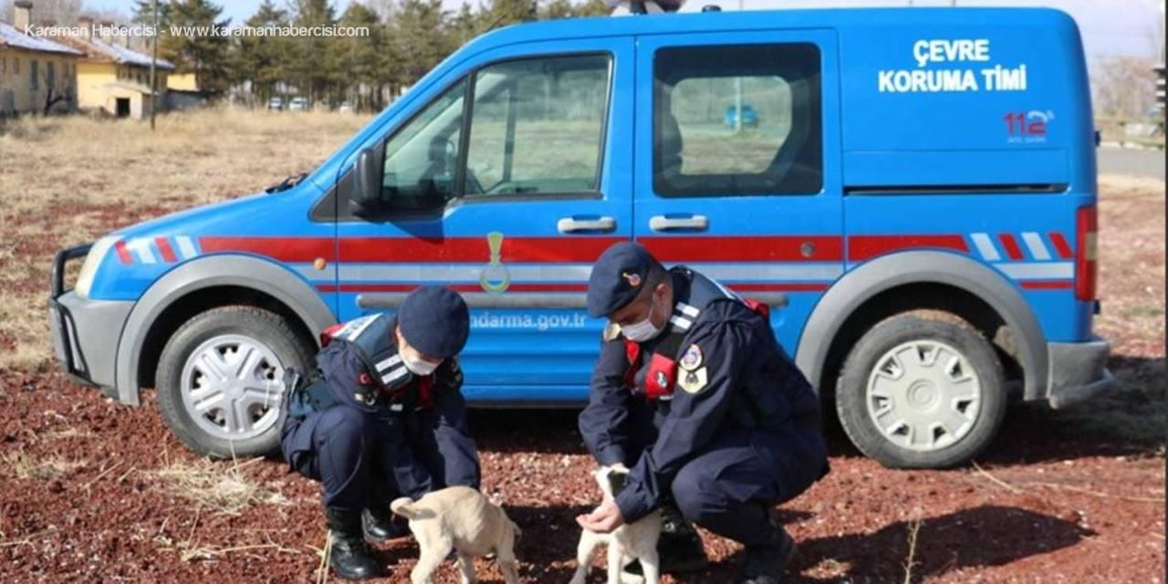 Aksaray'da Jandarma Yaban Hayvanlarını Unutmadı