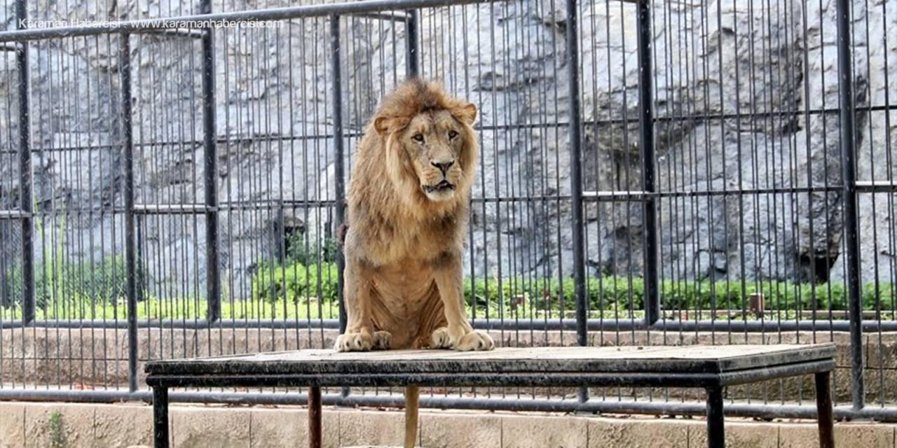Tarsus Doğa Parkı, Tatile Çıkan Öğrencileri Ücretsiz Misafir Edecek