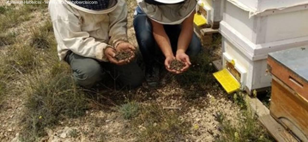 Karaman'da Zirai İlaçlar Arıları Telef Etti