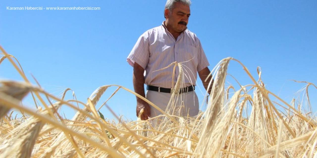 Kazanamayan Çiftci, Buğday Ekimini Bırakıyor