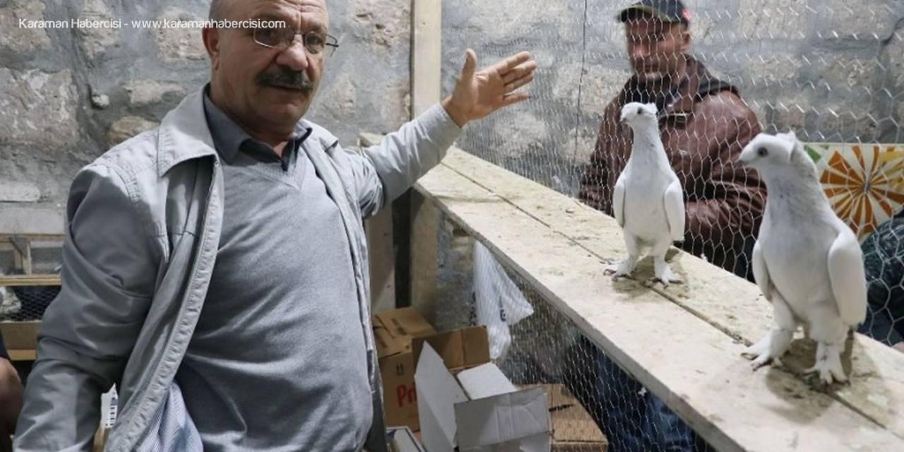 Aksaray'da Araba Fiyatlarıyla Yarışan Güvercinler