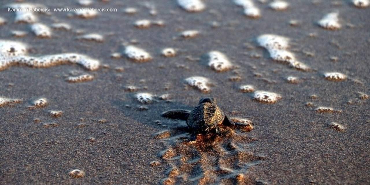 Dünya Mersin'deki Deniz Kaplumbağalarını Takip Ediyor