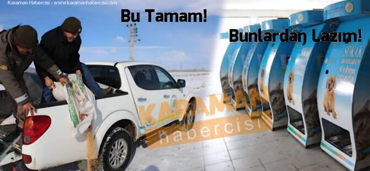 Karaman'da Doğal Hayat ve Sokak Hayvanları Unutulmamalı