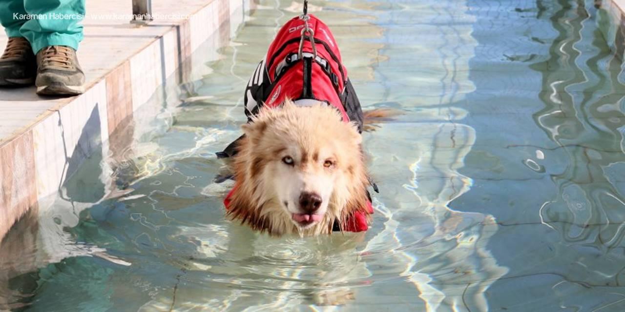 Köpekler İçin Fizik Tedavi Merkezi Ve Terapi Havuzu
