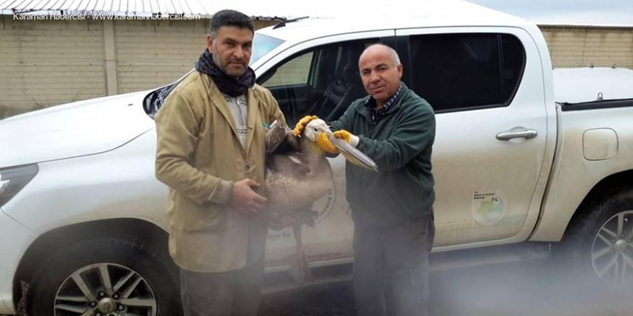 Konya'da Bulunan Pelikan ve Puhu Kuşu Koruma Altına Alındı