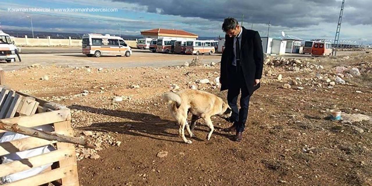 Ayağı Kangren Olan Köpeğe Karaman'da Dolmuş Şoförleri Sahip Çıktı