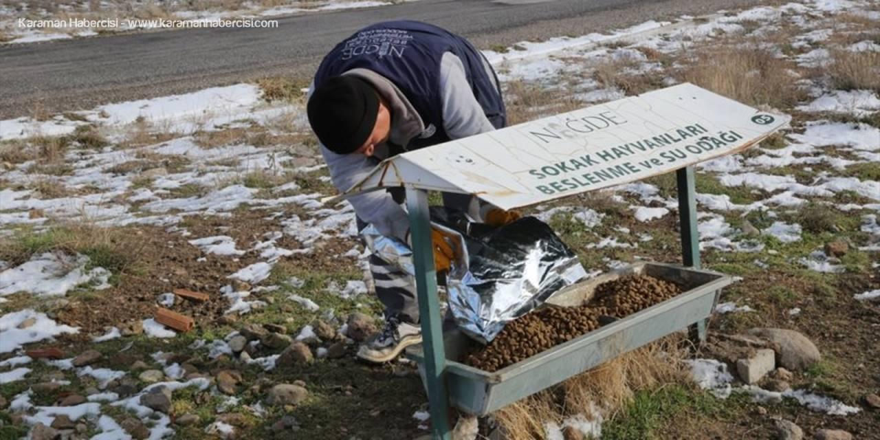 Niğde Belediyesi Sokak Hayvanları İçin Yem Bırakıyor