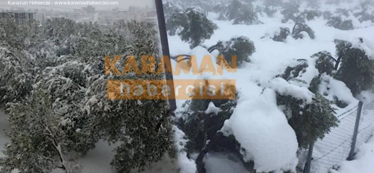 20 Yıl Sonra Yağan Kar Mut'ta Zeytinlere Zarar Verdi