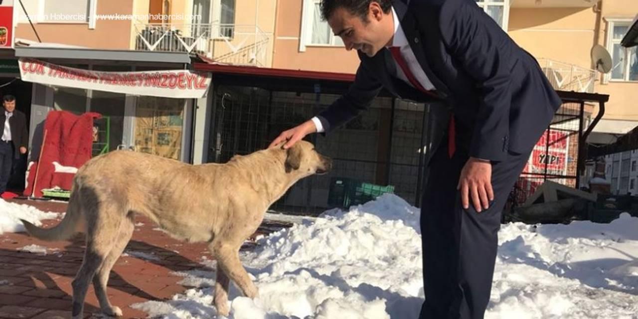 MHP Belediye Başkan Adayı Savaş Kalaycı 'Patiler Köyü'Projesini Hayata Geçirecek