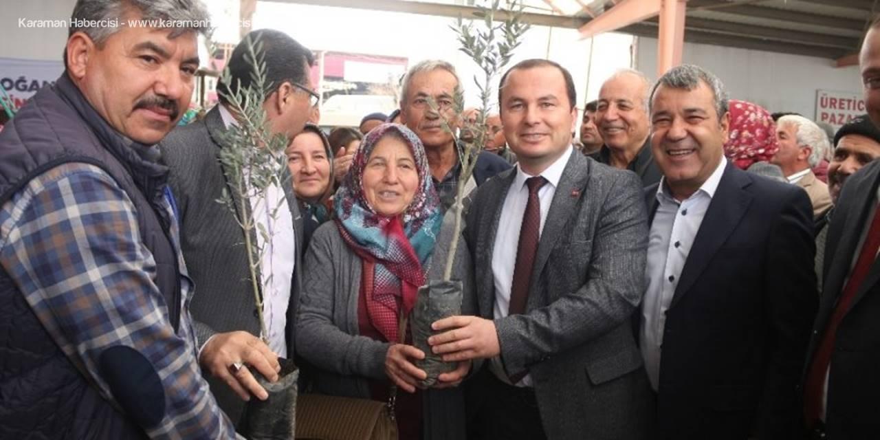 Mersin'de Çiftçilere Zeytin ve Ceviz Fidanı Dağıtıldı