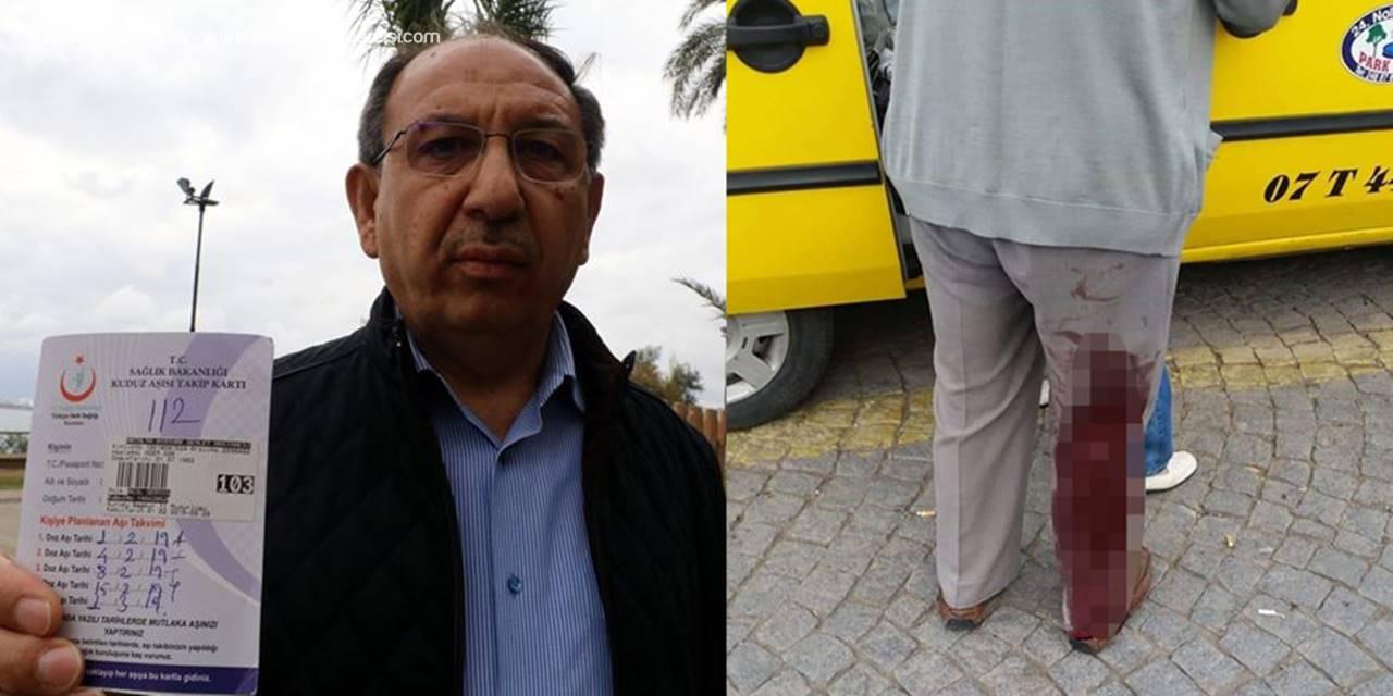 Antalya'da Köpeklerin Saldırdığı 2 Kişi Hastanelik Oldu
