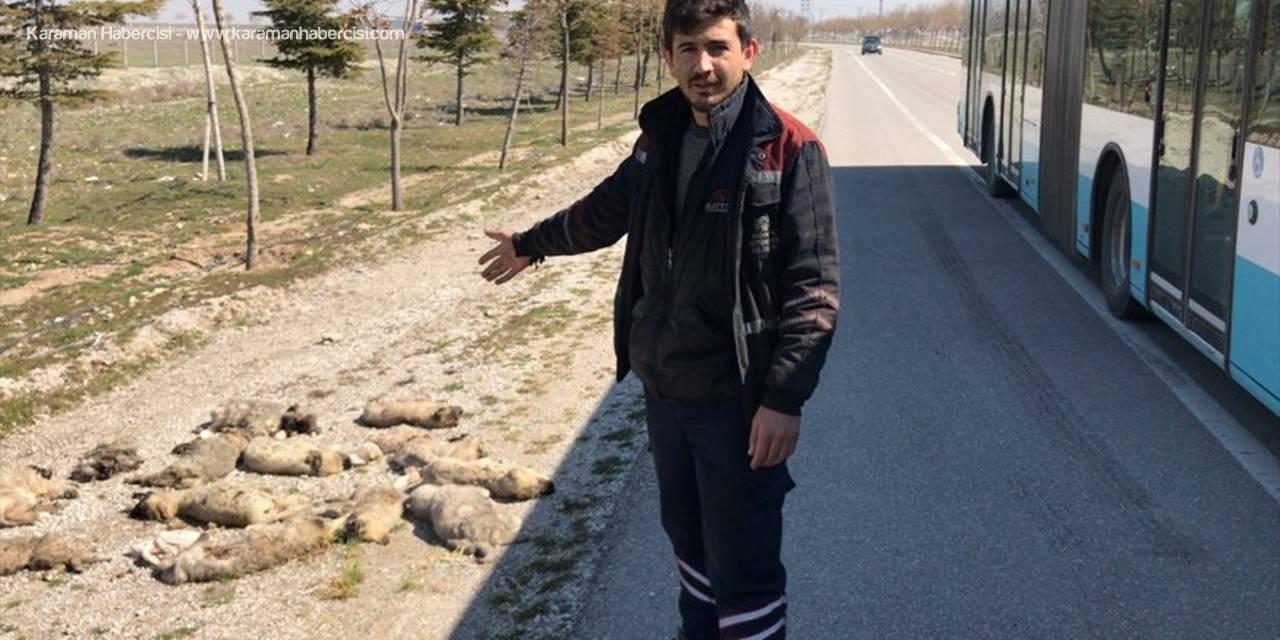 Konya'da Yol Kenarına Atılmış 13 Ölü Köpek Yavrusu Bulundu