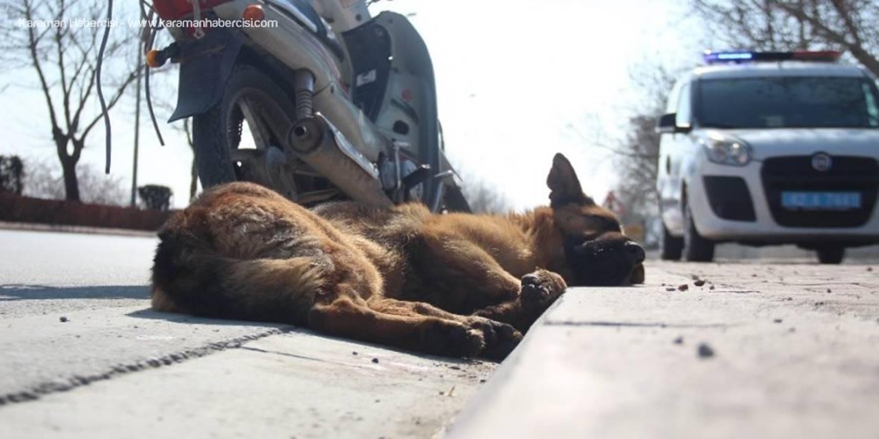 Konya'da Köpeği Motosiklete Bağlayıp Sürüklediler