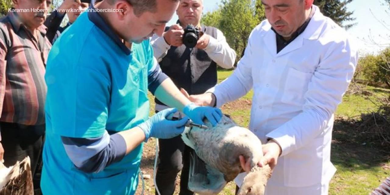 Antalya'da Kanatlı Hayvanlara 300 Bin Doz Aşı Uygulanacak