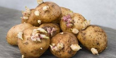 Filizlenen Patatese Dikkat!
