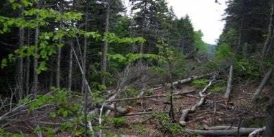 Karaman'da Kestiği Ağacın Altında Kalan İşçi Hayatını Kaybetti
